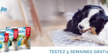 Test gratuit bâtonnets Purina DentaLife pour chiens avec Dogofriends