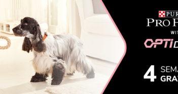 Test gratuit aliments pour chiens Purina Pro Plan Optiderma