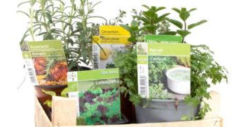 Bac de plantes aromatiques gratuit